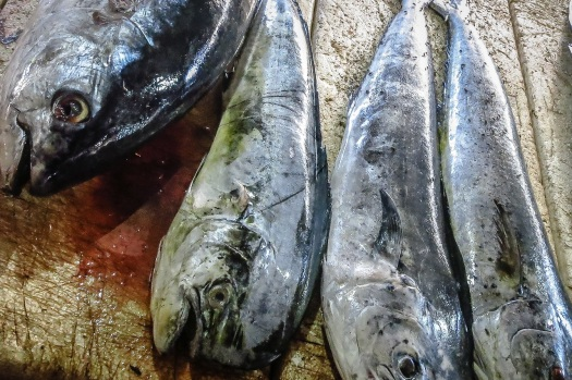 Tuna and Mahi-Mahi