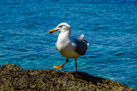 Jimmy the seagull